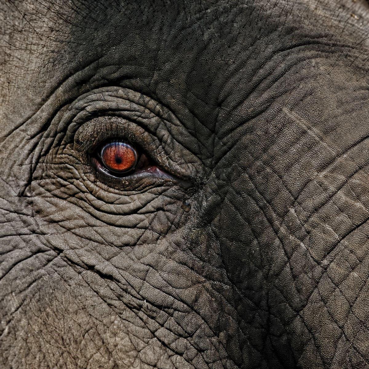 elefant-digitale-strategie-digital-business-development-prohaska-the-tean-2
